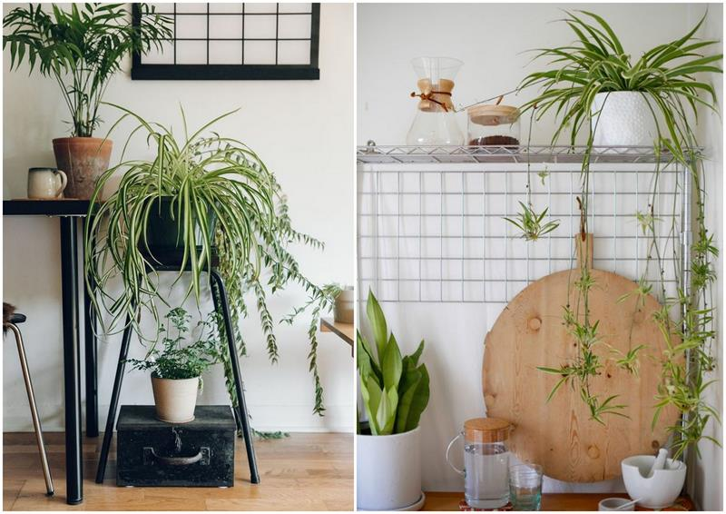 rośliny wnętrza