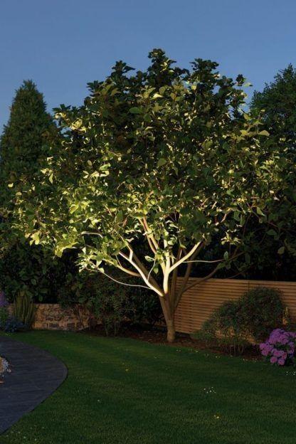 oświetlenie drzewa od dołu lampą w ogrodzie