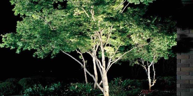 Jakie lampy wybrać do oświetlenia drzew w ogrodzie?
