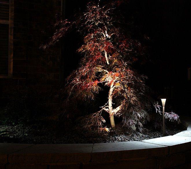 lampy do oświetlenia klonu palmowego
