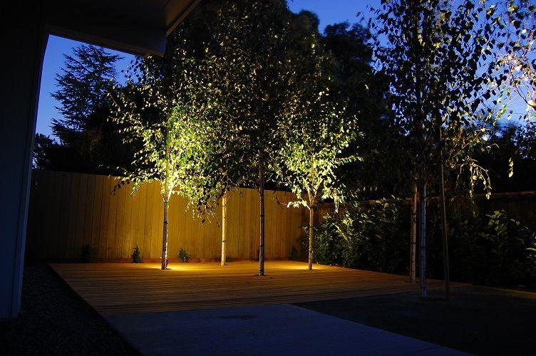 oświetlenie brzozy w ogrodzie - reflektorki do drzew