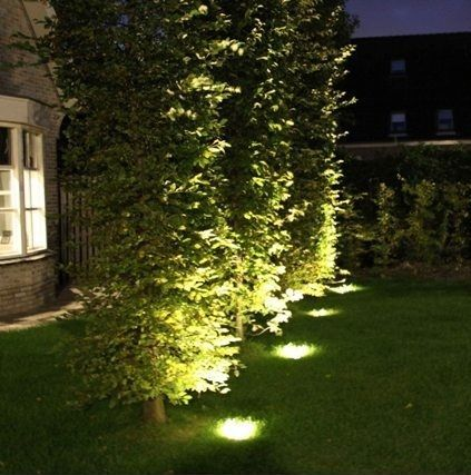 oświetlenie wiązu w ogrodzie