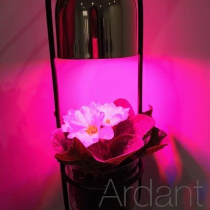 lampa z doniczką i żarówka wzrostową