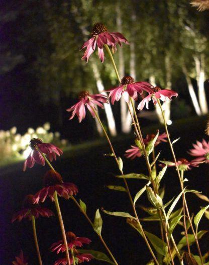 reflektorek do podświetlenia kwiatów, oczko do oświetlenia rabaty